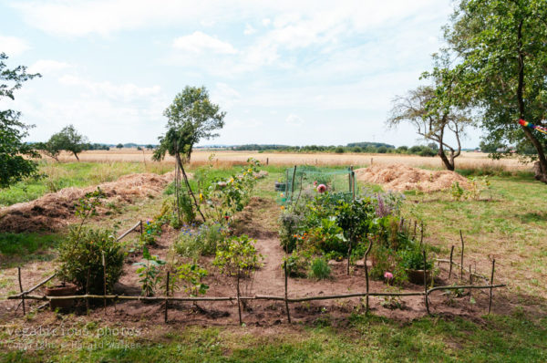 Der Garten nach 3 Monaten