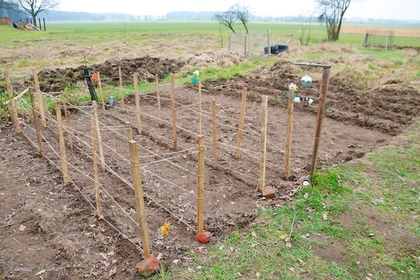 Reihen für die Ackerbohnen und Erbsen
