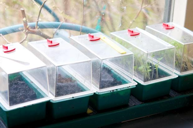 Seedlings in the house