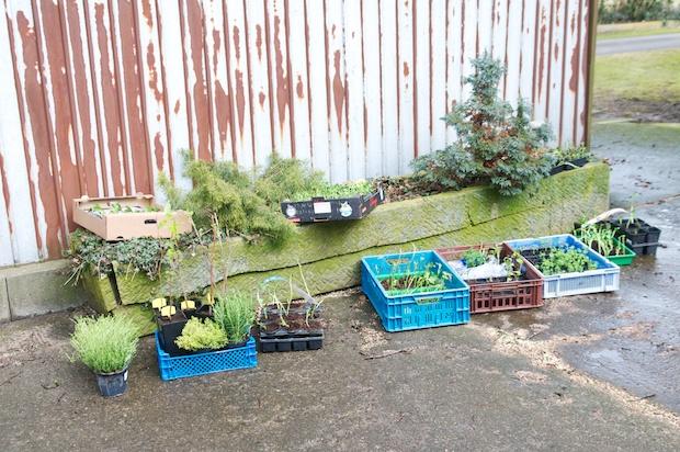 Hardening the seedlings