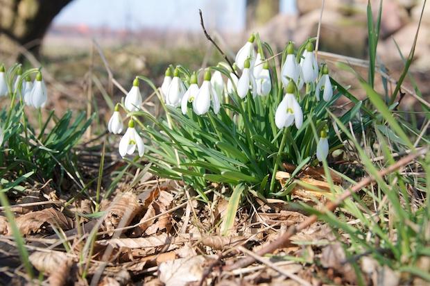 Finally springtime