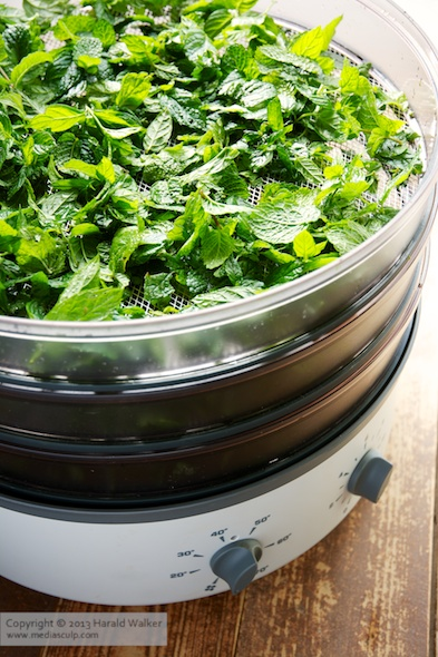 Drying peppermint leaves