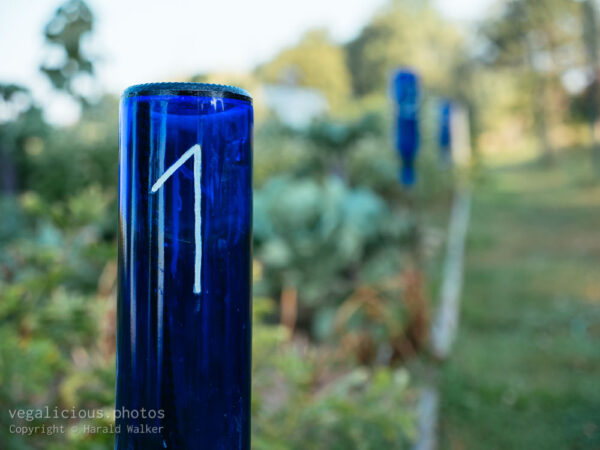 Old glass bottles used to number each plot.